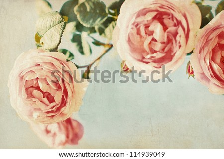 Vintage Background. Flowers Background. Vintage Paper.  Roses Pattern