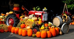 Vintage Farm Vehicles And Pumpkins in October