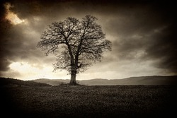 vintage old picture with alone tree