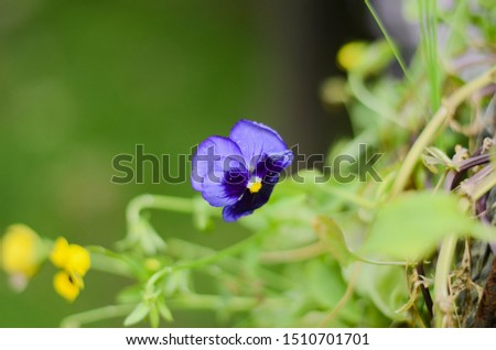 Violet flowers in a beautiful flower garden when the sun sets in the summer with good atmosphere. Focus on only part of the image.