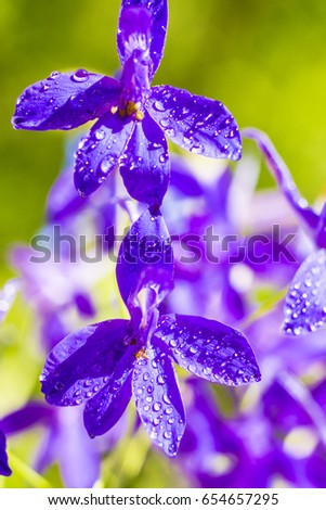 Violet flowers in forest ,green background ,nature ,purple ,petals ,drops ,violet ,green  ,beautiful ,natural ,macro ,decoration ,small ,thin ,garden ,park ,outside,exterior ,sun ,decor ,lovely ,cute