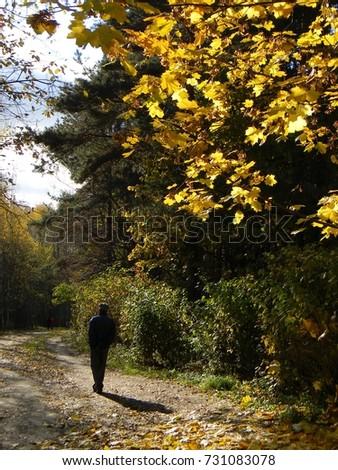 Walking in the woods #731083078