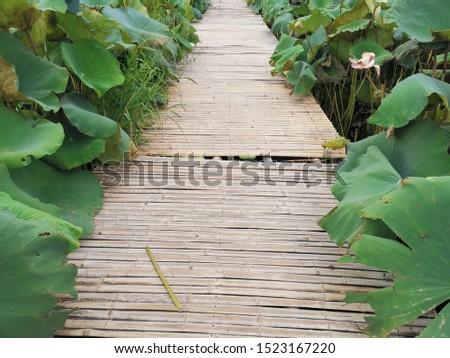 Walkway amid the lotus pond #1523167220