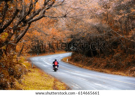 Free Photos Beautiful Pink Sakura Landscape View On Road At Doi Ang