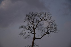 Wallpapers,Birds on the night tree