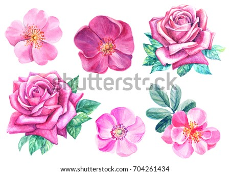 watercolor illustration,set of pink rose flowers, rosehip