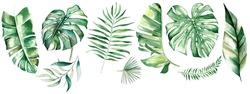 Watercolor tropical leaves. Botanical jungle illustration. Exotic. watercolor set