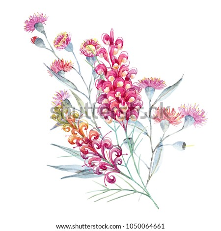 Watercolor tropical print with Australian plants,  Grevillea