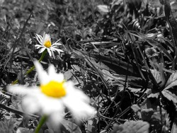 (We are the Flowers) The meaning of this photo is that we are (Flowers) good People and and the Black colour are bad People in our world