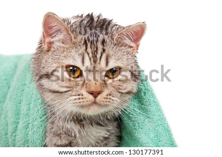 wet cat in green towel