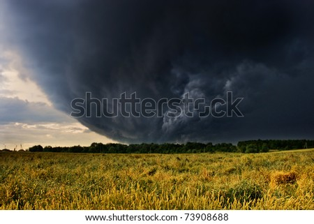 wheat bending under thunderstorm