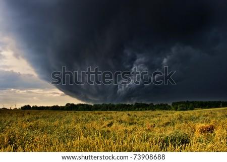 wheat bending under thunderstorm