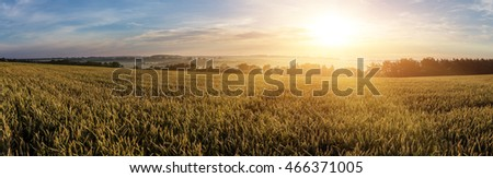 Wheat field and foggy morning meadow on the background small depth of field.  Copy space installation of sunlight on the horizon. majestic rural landscape. Retro and vintage style, soft filter. #466371005