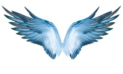 White background with wings This has clipping path.