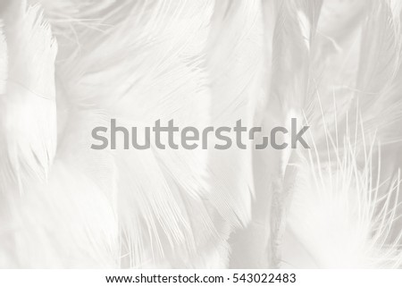 white feather texture background #543022483