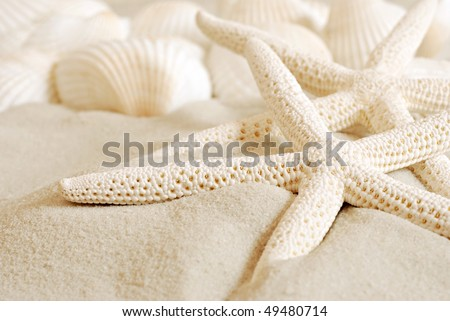 White finger starfish and seashells on white sand.  Macro with extremely shallow dof. #49480714