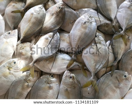 White fish for sale to customers. #1134181109