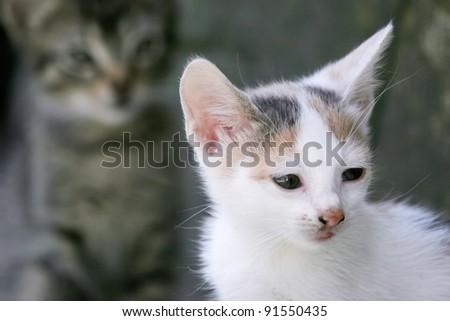 White kitten. Portrait of white kitten