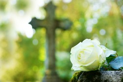 white rose on grave in graveyard, copy space
