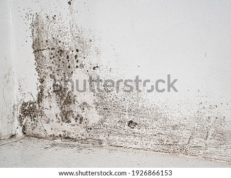 white wall with black mold. dangerous fungus that needs to be destroyed. It spoils look of house and is very harmful parasite for human health. Photo stock ©