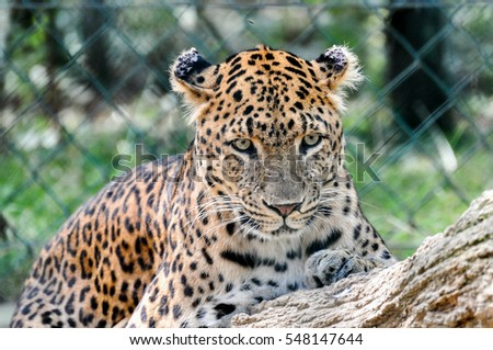 Wild animals with blur background #548147644
