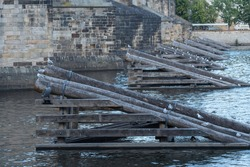 wild bird seagull on wooden logs. wild birds on on wooden barriers in front of the pillars of Charles Bridge in the center of Prague. The background is stones Charles Bridge and flowing river Vltava