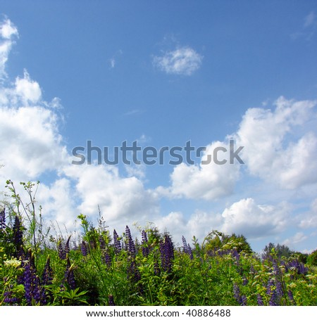 wild flowers and grass and the blue sky with clouds