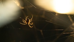 wildlife photography based on a species of arachnid on its web