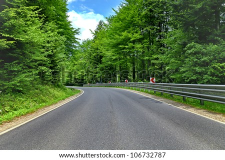 winding curve road in a beech green forest