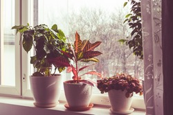 windowsill with house plants. beautiful plants. Plants in pots in a bright window.potted plants. Decor.