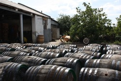 Wine barrels on a sunny day.