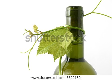wine bottle and young grape vine branch in early summer.