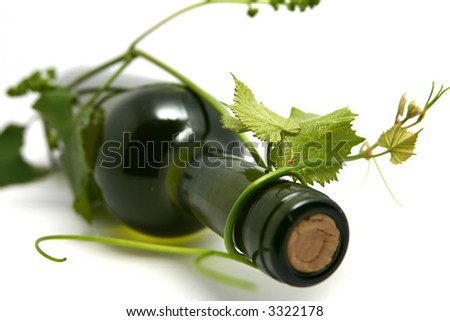 wine bottle and young grape vine branch in early summer. shallow depth of focus