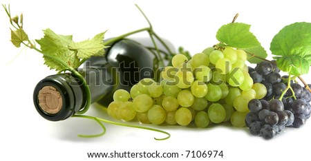 wine bottle and young grape vine branch. shallow depth of focus