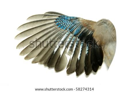 wings #58274314