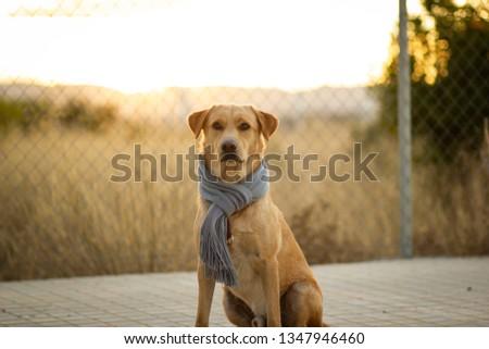 WINTER DOG PORTRAIT #1347946460