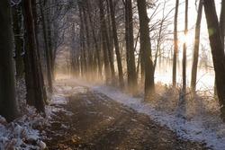 ''Winter landscape'' mystic fog