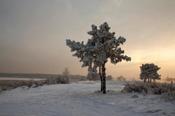 Winter nature sunset tree silhouette. Winter sunset tree snow patterns. Dense fog over the river in winter. Sunrise in the thick winter fog. landscape Trees with snow in a park. Sunset sunrise.