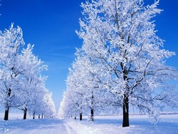 winter spells and a winter road on which snow attacked next to it and on both sides trees on which there is snow, and the sky is softly blue.