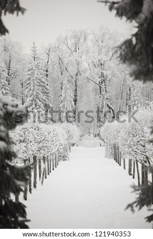 winter trees on snow white background