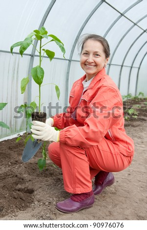 woman with pepper  seedlings in pots  at hothouse - stock photo