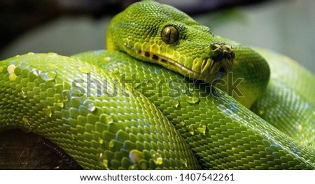 Wonderful and dangerous reptiles These reptiles are found in rainforests and deserts.