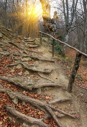 wooden stairs in autumn forest in mountains