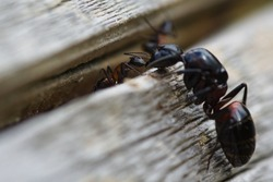 Worker ants feeding the queen ants in the autumn outdoors