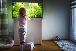 2 year old child indoors watching fish swiming in big fish tank, aquarium. Aquaria concept.