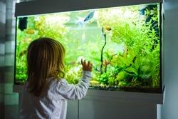 2 year old child indoors watching fish swiming in big fish tank, aquarium. Aquaria concept.