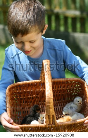6-7 years old boy with basket of newborn chicken - vacation
