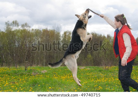 50 Years Old Woman Playing With Alsatian Dog On Grass Stock Photo