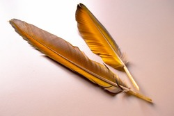 Yellow feathers on white background. parrot feathers