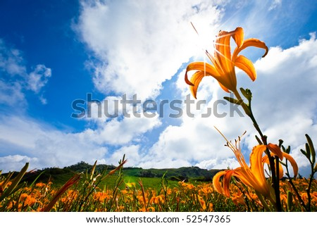 yellow flower in the mountain with beautiful cloudscape background